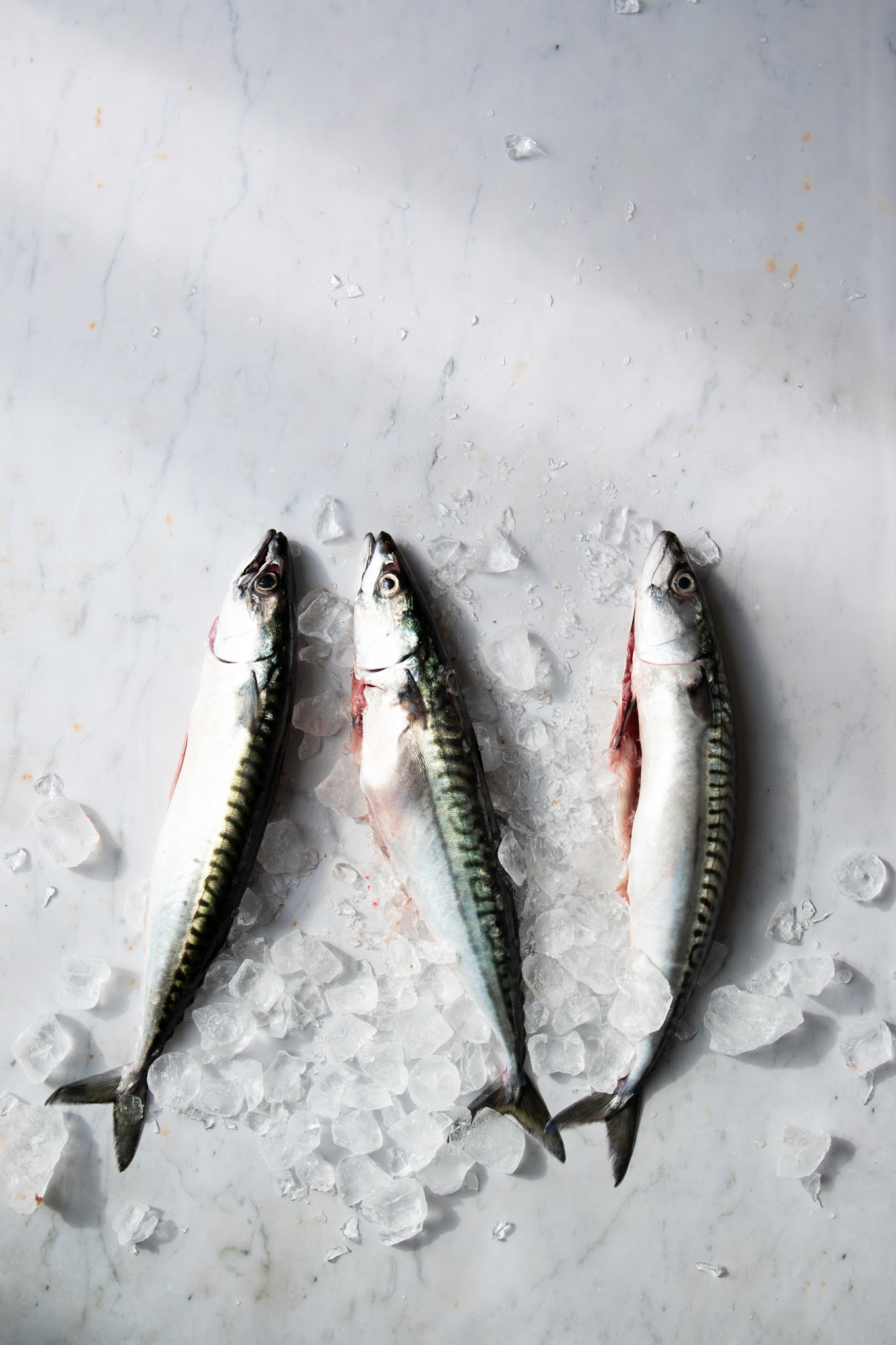 Mackerel 1