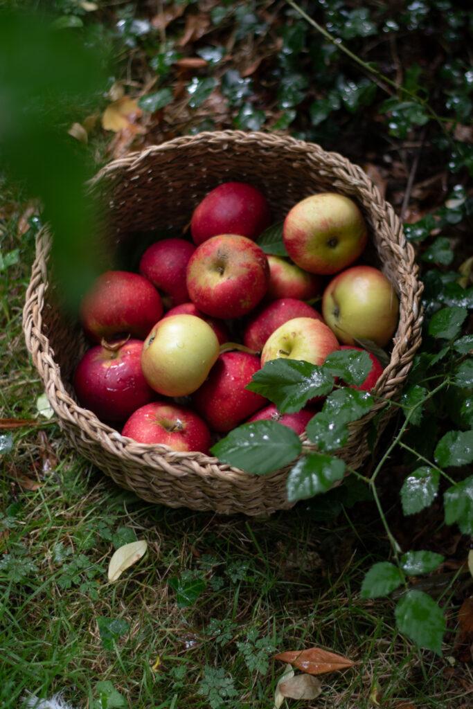 Apple & cobnut Tart