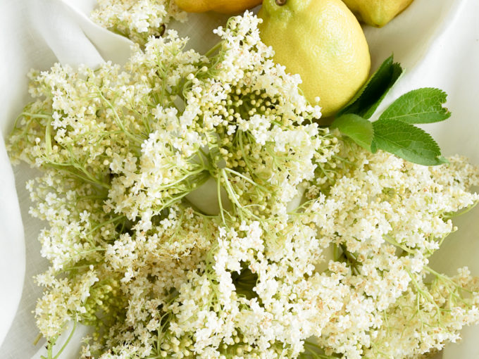 Elderflower Shrub